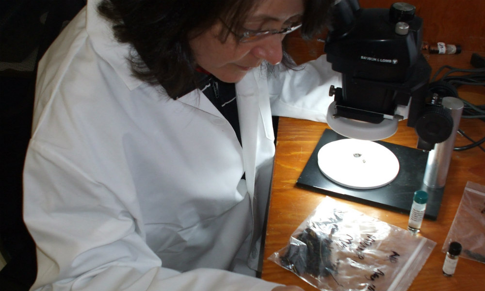 image of beetle research with microscope
