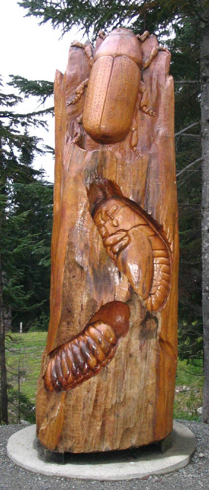 image of carving of tree infested with mountain pine beetle