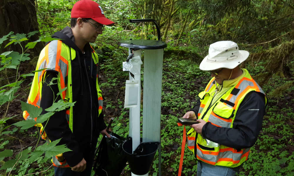 image of workers servicing panel trap in forest